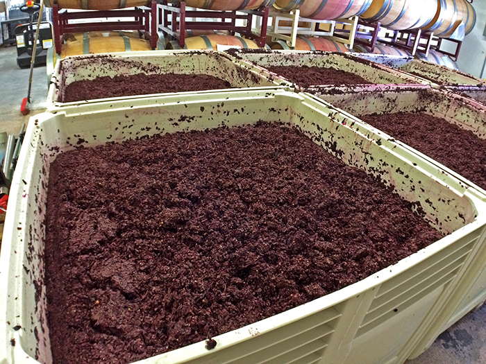 Crushed Merlot grapes fermenting
