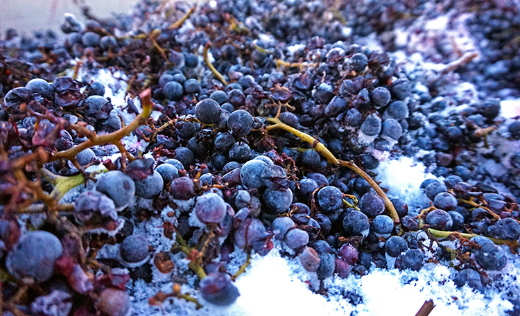 Frozen Cabernet Franc Grapes